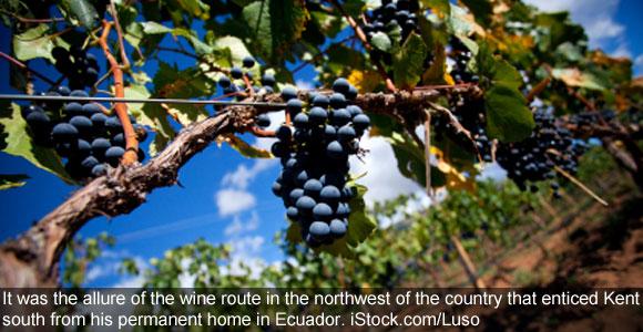Northern Argentina's Oasis: Vineyard-rich Cafayate