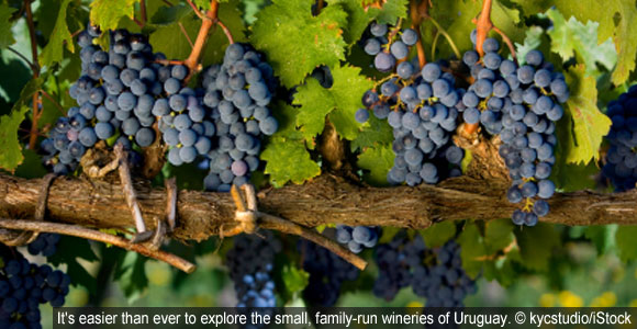 Get A Taste Of Uruguay's 140-Year-Old Wine Secret