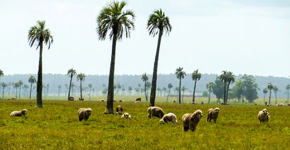 The Earth's Bounty: How to Harvest an Income in Uruguay