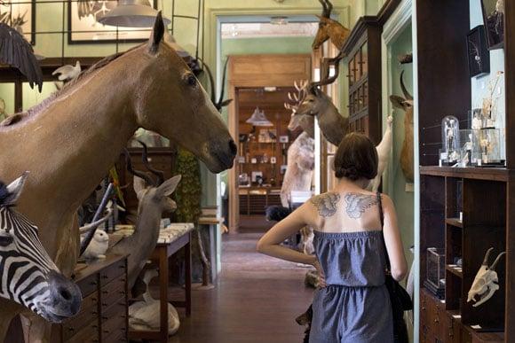 The Best Curiosity Shop in Paris