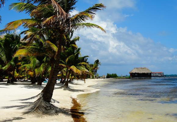 Coffee-Shop Dreams on a Tropical Island