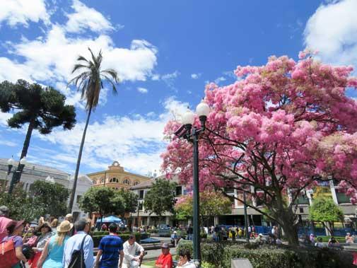 Experience the Gourmet Delights of Ecuador's Capital City