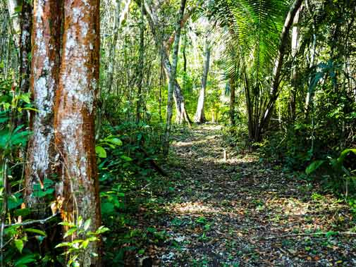 A Profitable, Eco-Friendly Business in the Cayo