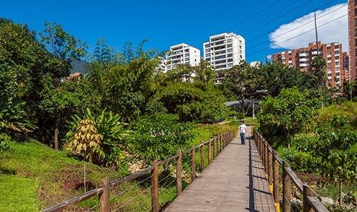 My Own Piece of Paradise: Urban Gardening in Medellín