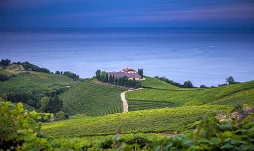 Four Expat Wine Entrepreneurs in Spain