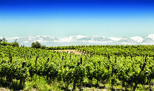 Your Own Vineyard in Argentina—Trouble-Free